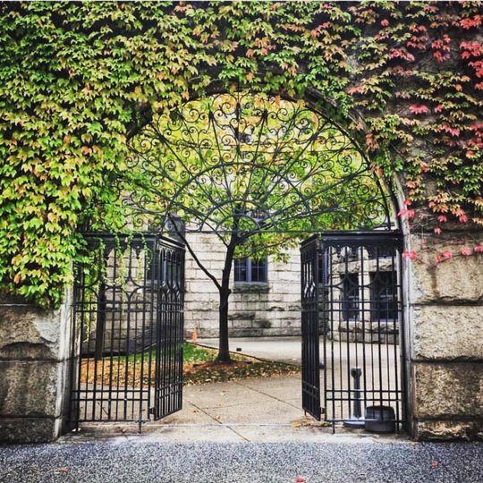 Ivy Iron Gates