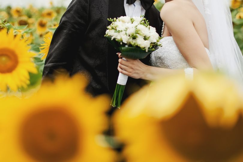 Newlyweds in the sunflower field