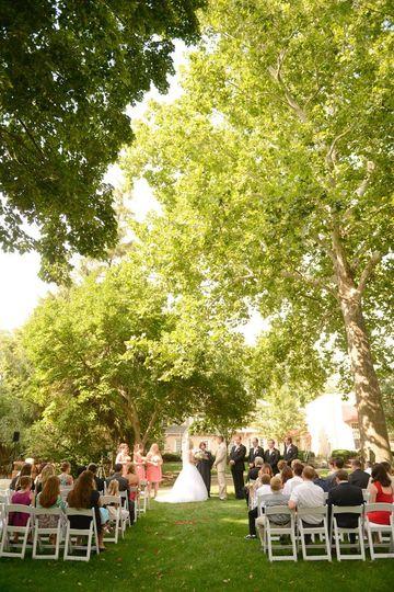 Tall lush green trees
