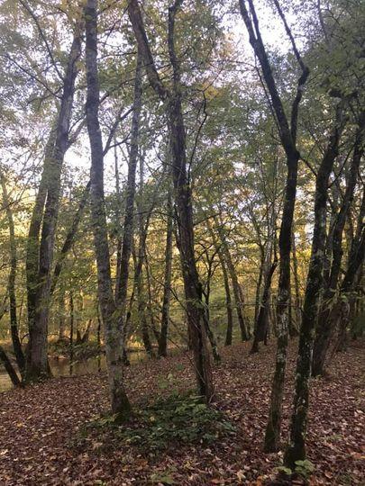 Amid the trees