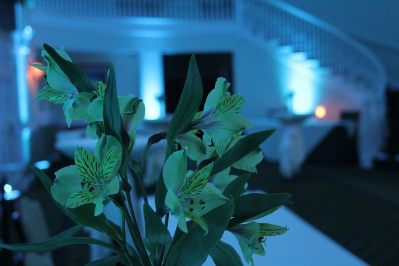 Dazzle your guests by uplighting your room with incredible LED lights.