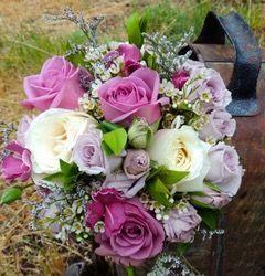 Pretty violet flowers