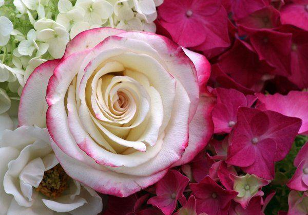 Tmx 1247253831199 IMG5818 Newfoundland wedding florist