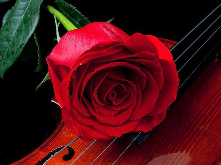 Tmx 1352737935256 Redrosewithviolingarrygay Raleigh, NC wedding ceremonymusic