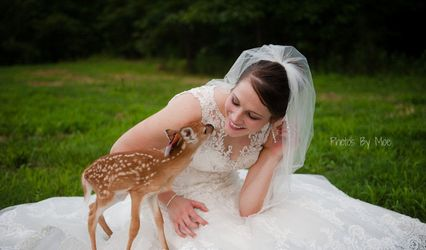 White City Weddings and Events 1
