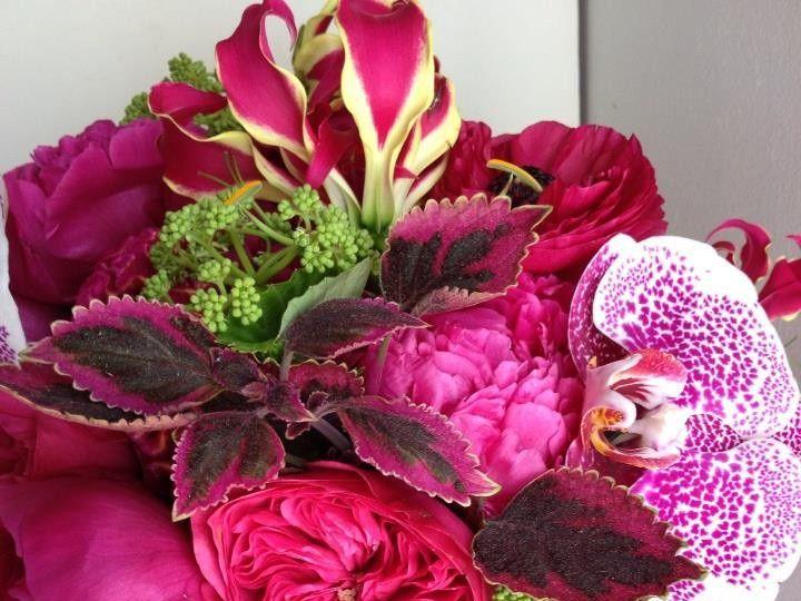 Tmx 1415187342229 946084101529162711003542035267938n Exeter, New Hampshire wedding florist