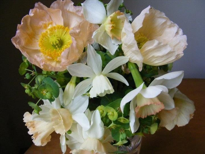 """Spring bouquet:  Pale peach poppies, """"pink"""" daffodils, Euphorbia, etc."""