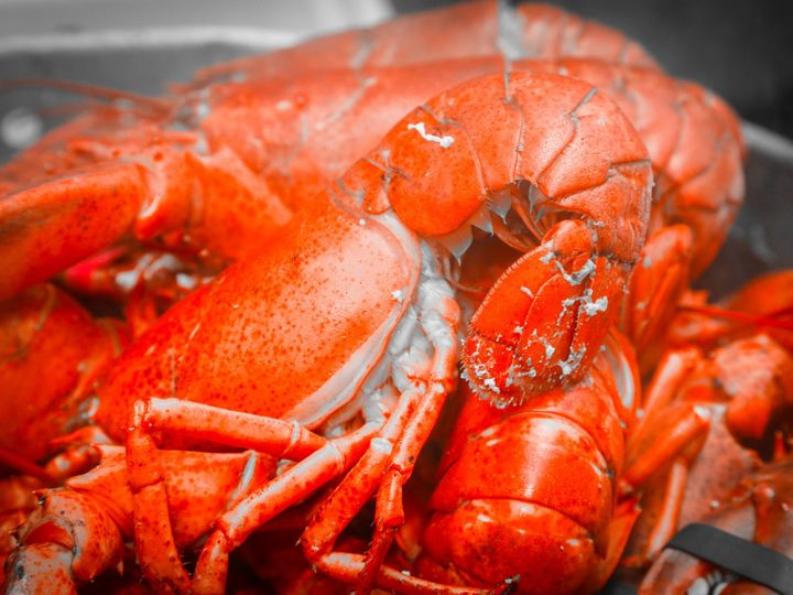 Tmx 1403710049826 Lobster 2 Derby, CT wedding catering