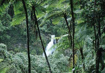 Tmx 1267650699400 TaveunitheGardenIslandofFiji Fallbrook wedding travel