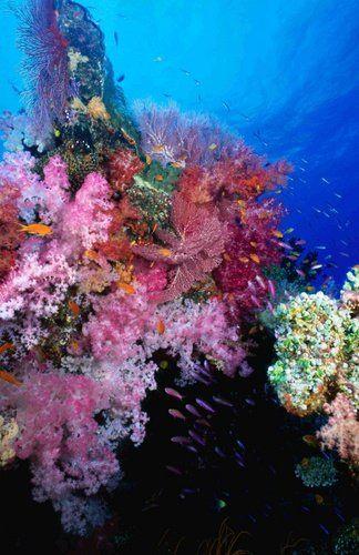 Tmx 1267650714916 UnderwaterlifeRainbowPassageTaveuniIsland Fallbrook wedding travel
