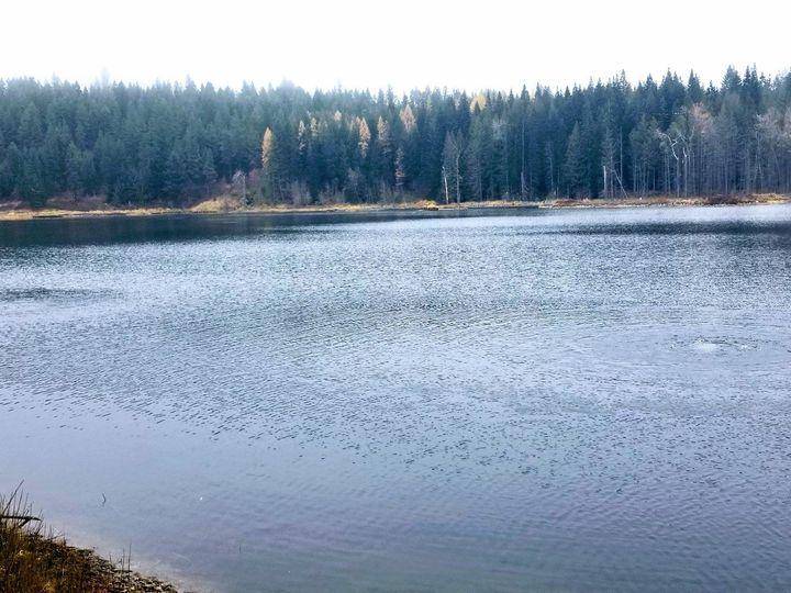 Tmx Side Lake 51 1968645 158873230376904 Spokane, WA wedding venue