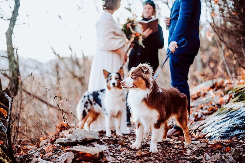 Ceremony with pets