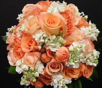 Tmx 1514990159291 Image002 Newport Beach wedding florist