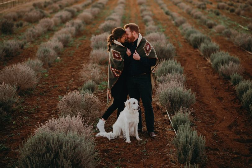 Engagements in Lavender Fields