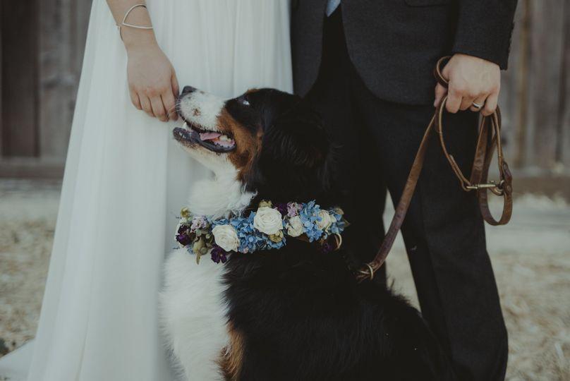 Flowers around the dog