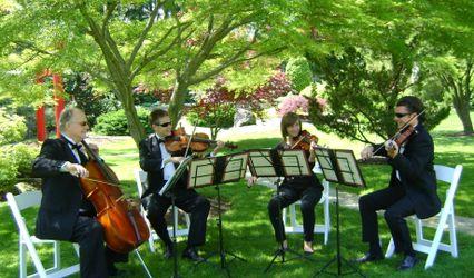 Millenius Strings