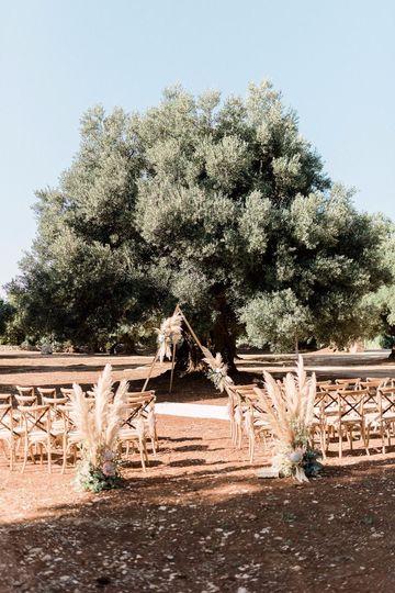 Ceremony under olive trees