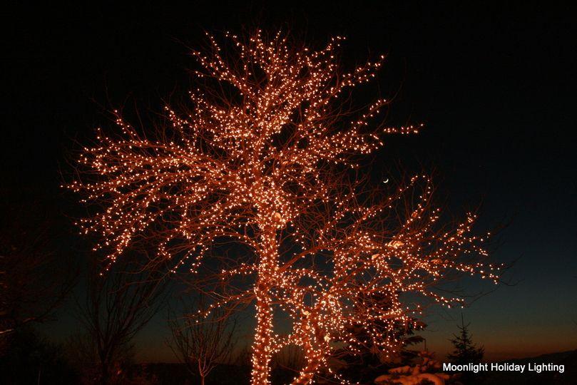 Entire tree lights