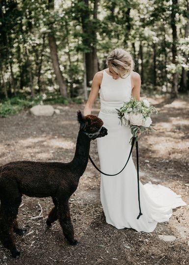 Bride with an Adorable Alpaca