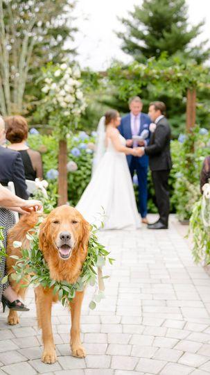 Wedding Ceremony w/Dog