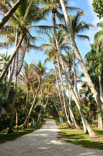 Palm-lined roads