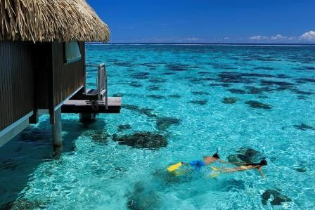 Tmx 1455087364583 Moz Hilton Moorea Snorkeling.galleryimage.1 San Ramon, California wedding travel