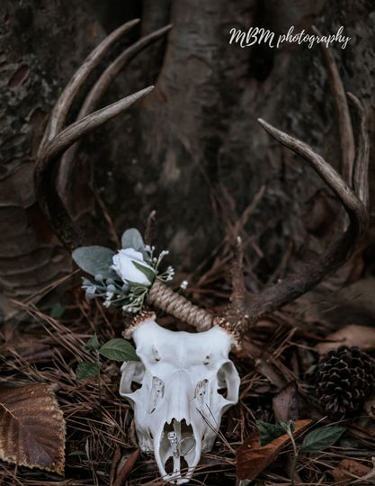 Deer head details