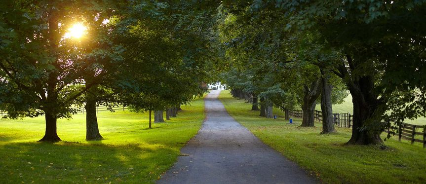 Tree-lined driveway to the Estate