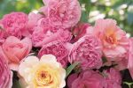 Belles Fleurs image