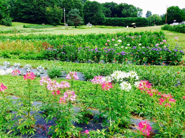 3+ acres of flowers