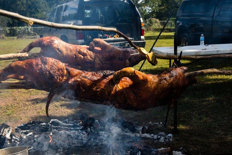 Tasty tasty pigs
