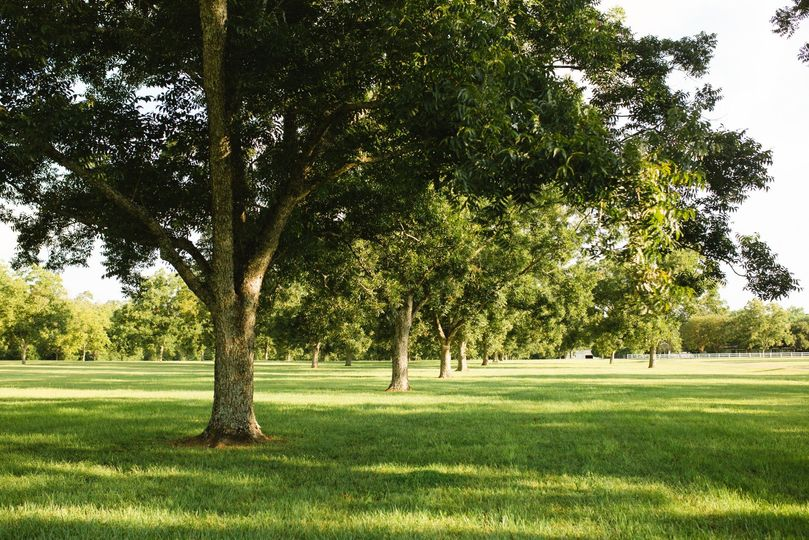 Mature trees lining the grounds