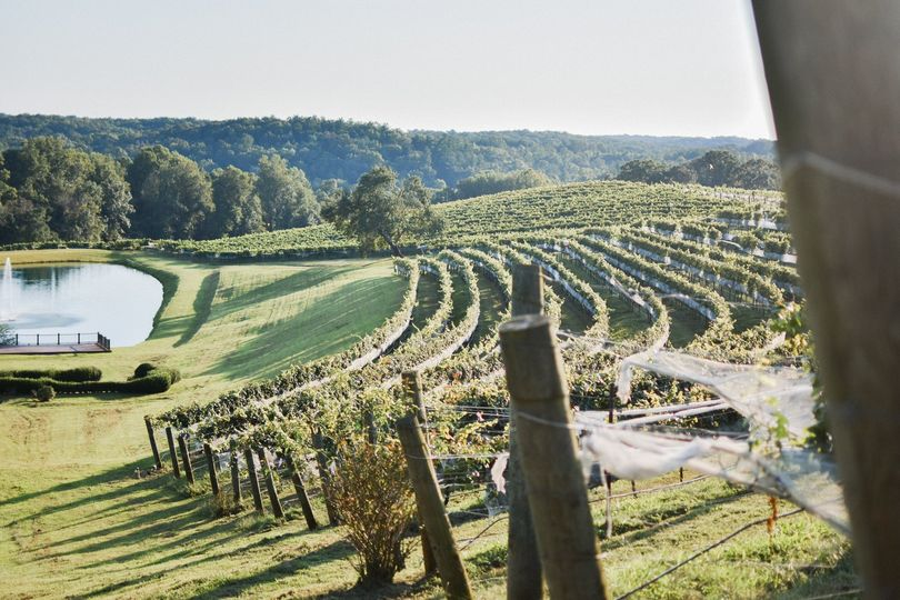 Monteluce vineyards