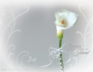 Panoramic wedding program cover featuring a light grey background and a single white calla lily and...