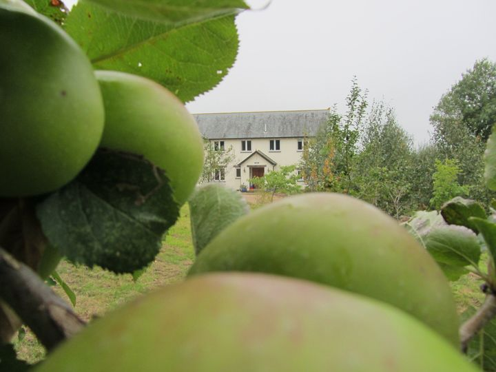 The farmhouse from the orchard