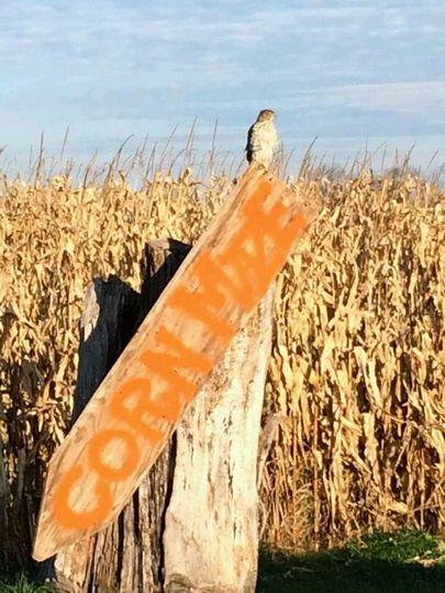 Corn maze at Northern Star Farm