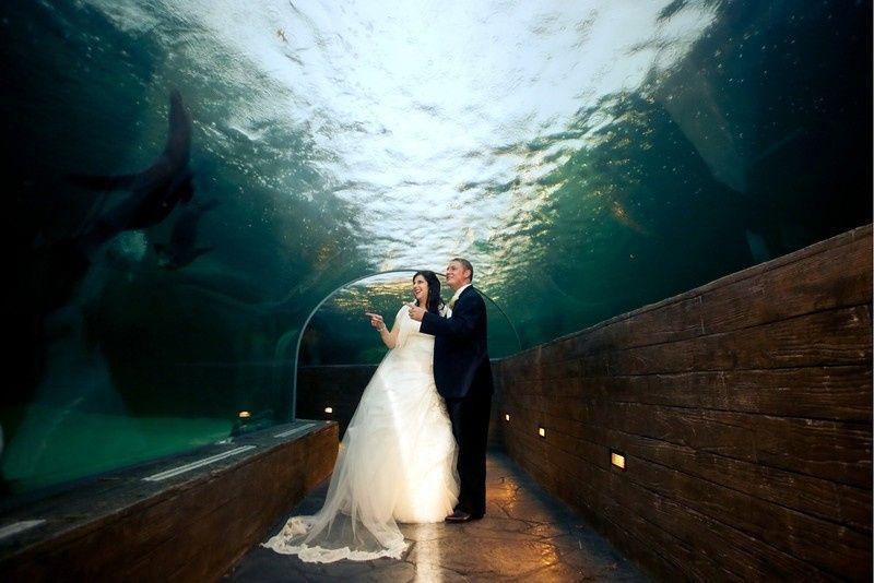 Sea Lion Sound Tunnel
