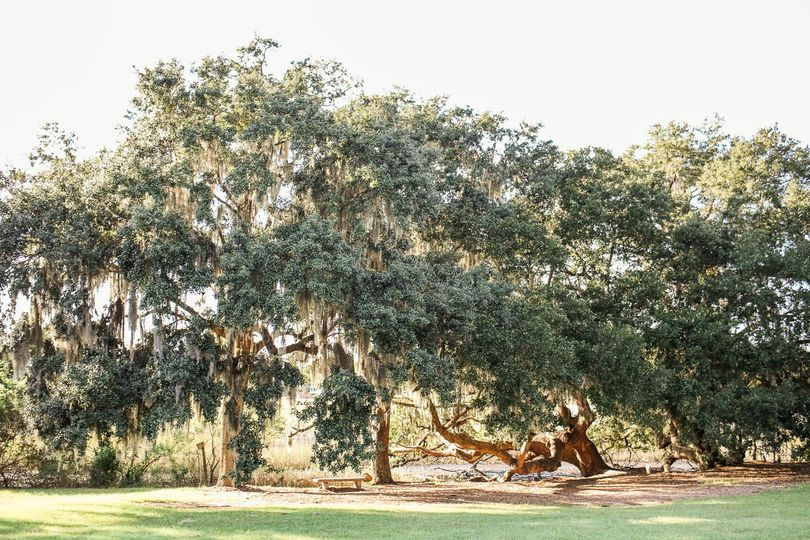 oak spanish moss boone hall plantation charleston