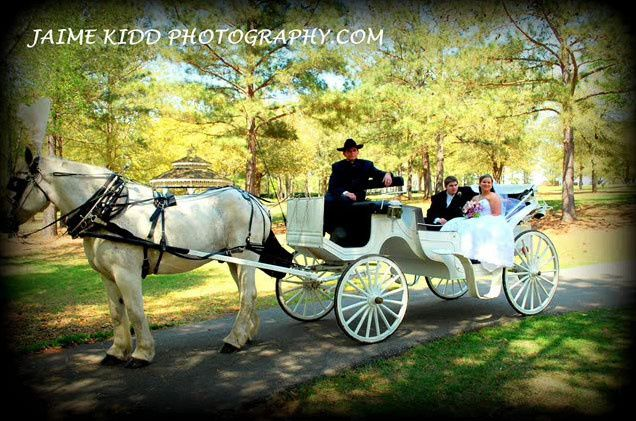 horse and carriage2