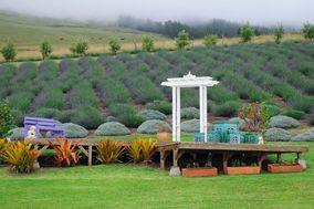 Alii Kula Lavender Maui