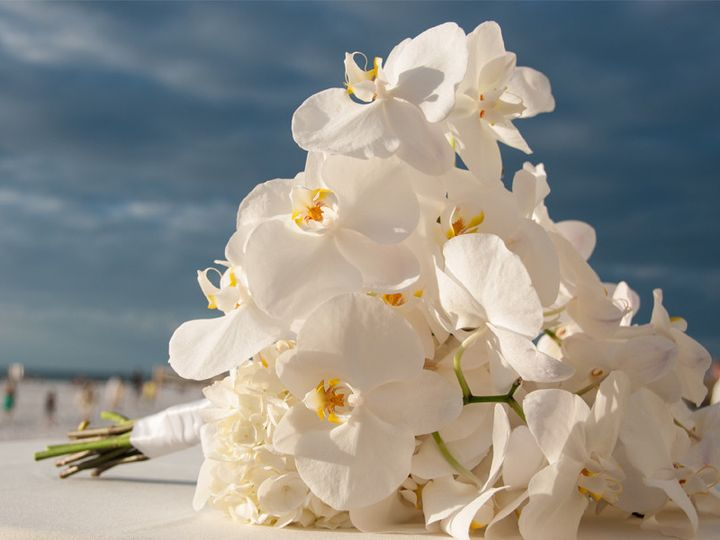 Tmx 1391388727133 Erin  Tampa, Florida wedding florist
