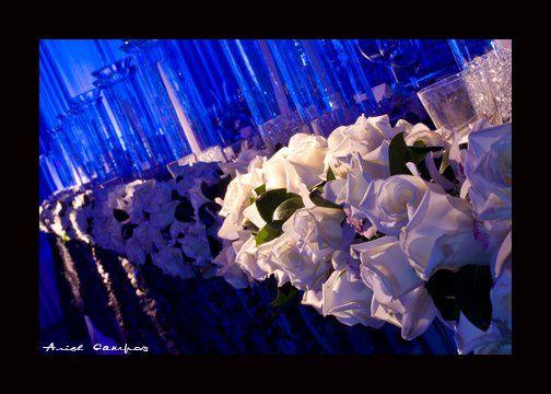 Line up of white roses.