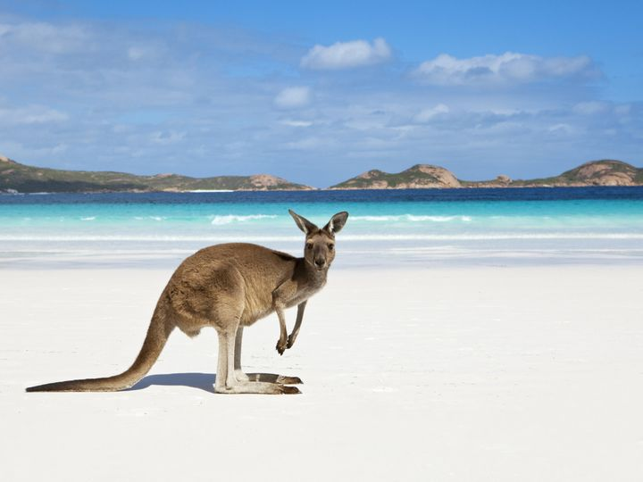 Tmx 1437759021708 Kangaroo On Beach 1 Oakland wedding travel