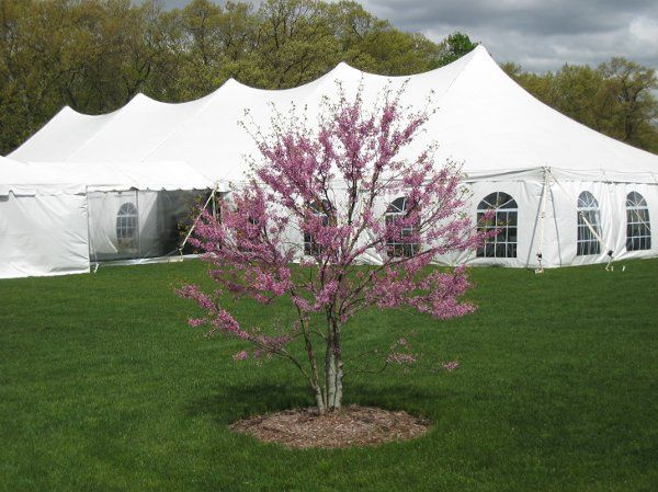 800x800 1327692580357 kss40x80pl; 800x800 1327692689467 tentspictures027 ... & Tents Unlimited - Event Rentals - Torrington CT - WeddingWire