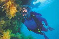 Diving at Matangi  Countless dive sites nearby including the famous Great White Wall in the Somo...