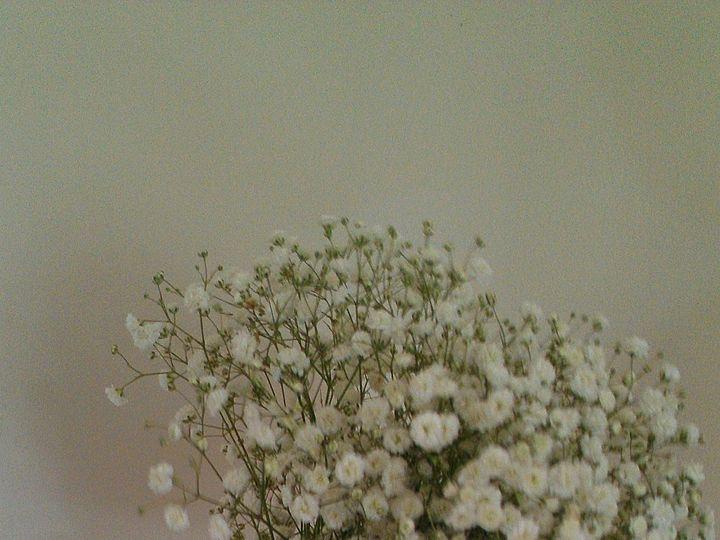 Tmx Imag1212 51 53475 157428108018414 Gilbertsville, PA wedding florist