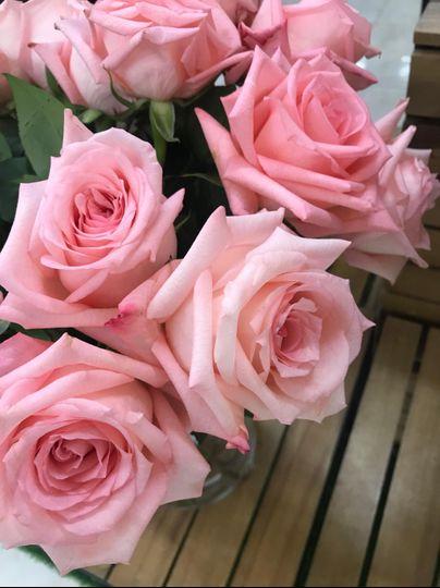 rosas rosadas 51 1061575 1557269480