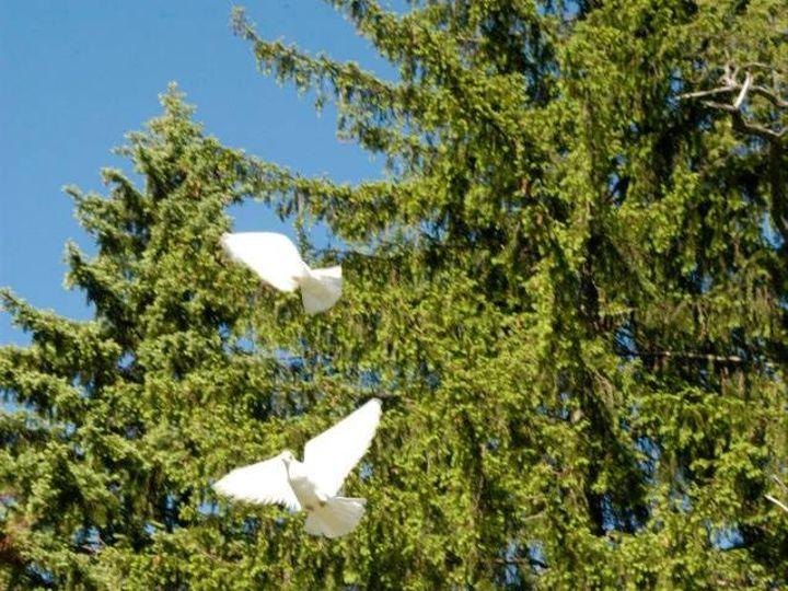Tmx Doves After Toss 51 1103575 158294682655511 Allison Park, PA wedding rental