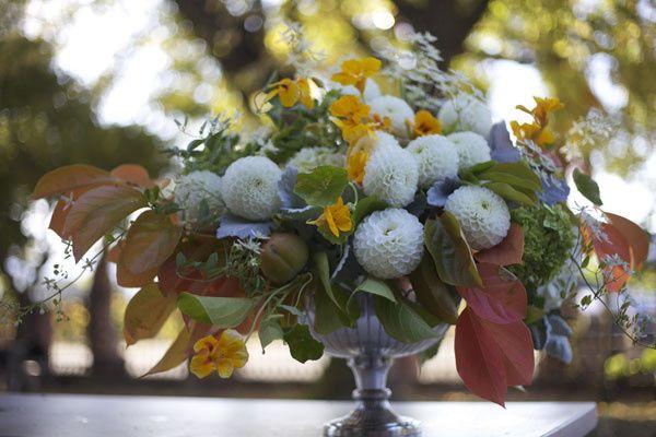 bella fiori dahlia
