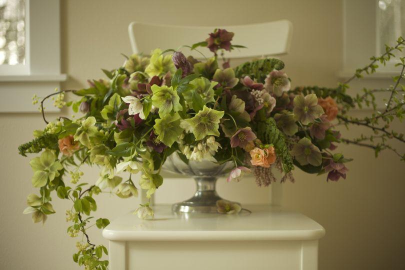 bella fiori hellebore